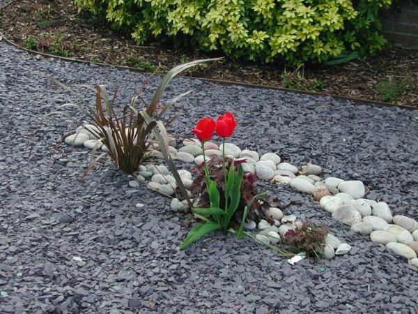 D co jardin paillage exemples d 39 am nagements for Paillage jardin