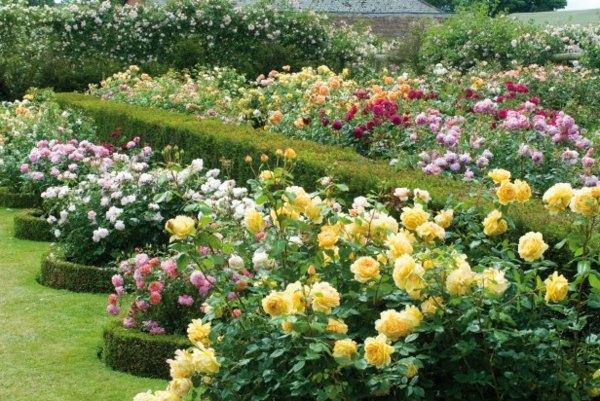 deco jardin rosiers