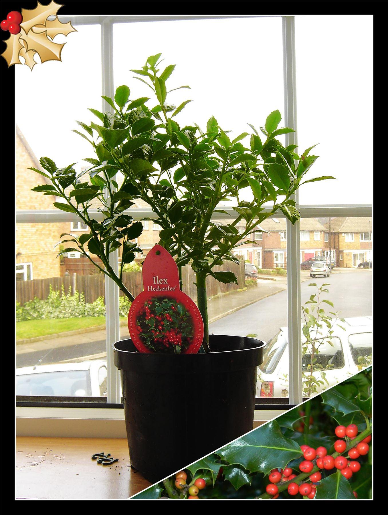 D co noel jardin des plantes exemples d 39 am nagements for Decoration jardin plantes