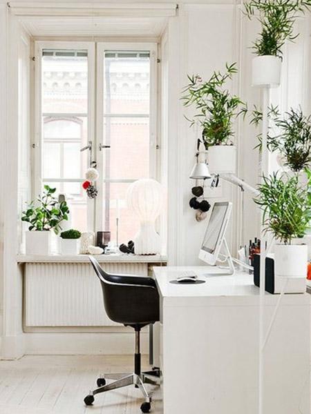 d coration bureau plantes exemples d 39 am nagements. Black Bedroom Furniture Sets. Home Design Ideas